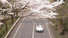 芳春のターンパイク箱根