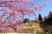 上田城址公園の桜(昼間編と夜桜編)