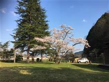 お花見キャンプ!!!