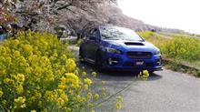 熊谷桜堤&こだま千本桜と春の秩父