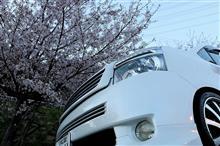 桜コラボ 2018