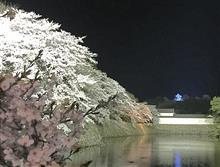 桜🌸満開の彦根城