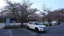 秩父ミューズパークの桜は・・・