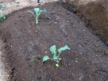 先週末の庭弄り Ⅱ