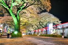 日立平和通りの夜桜(葉桜‼)
