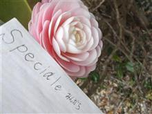㊙ෆ(*///◡///*)ෆチュ画像です☆  Alizee /Moi Lolita ♪ ઈ(ව̐ ˒̫̮ ව̐)¨*•.¸¸♪ ゚*♡
