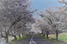 桜撮影ドライブ  Part.1