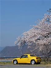 今年も会えて嬉しい、千曲川沿いの水天宮様の桜