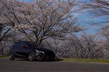 今年の桜まとめ💨