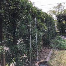 生垣の剪定