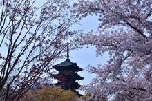 古都の桜  ー京都-