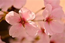 最近のぶらぶらフォト3月中旬~4月上旬 春だね~(*^-^*)