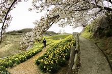 水仙@信州国際音楽村からの信州プロレスin上田城千本桜祭り