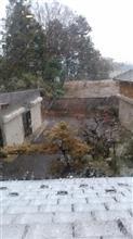 めっちゃ雪降ってきたよ
