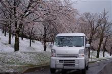 桜と雪景色⁉