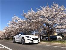RCZで桜満開の諏訪湖をモーニングドライブ…♪
