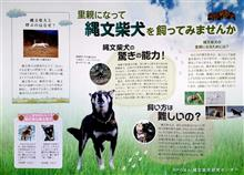 縄文柴犬って、知ってました?