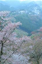 吉野 残花の旅
