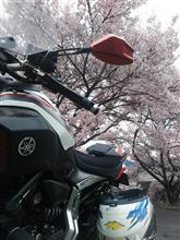 高遠城址桜ツーリング