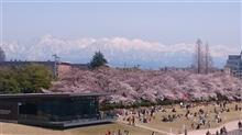 桜と立山連峰