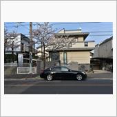 V36と桜