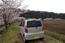 代車で桜のハシゴ