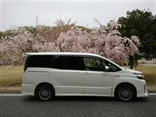 桜、散る。