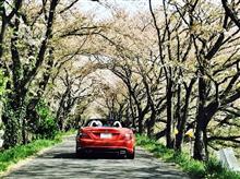 岐阜県の桜を追いかけて〜