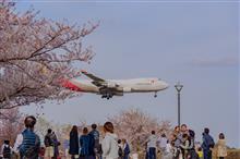 さくらの山公園の桜と飛行機