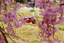 桜が散った?なら、咲いている所へ行けば良い!2018年バージョン。