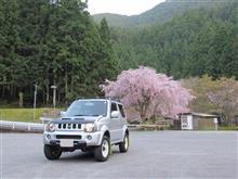 桜は終わり⁉
