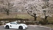 桜、はしごしちゃいました