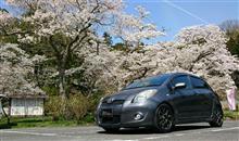 洗車と桜。