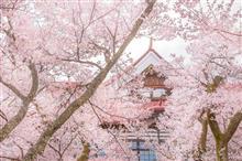 桜ドライブ④-1 (高遠)