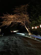 今年の桜は早かった〜(>_<)その1
