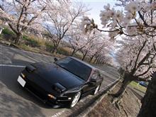 ワンちゅと桜と…反省と(´。`*)
