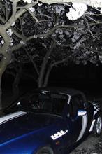 21時の桜