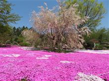 春のせいか・・・最近花ばっかり見てる気がする( 一一)