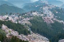 2018 SAKURA PHOTO Part.5 【吉野山の桜】