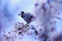 オールドタムロンで撮る春。