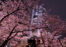 夜桜  in六本木🌸