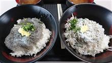 静岡田子の浦のしらす丼