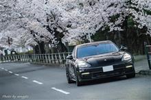 桜撮影その2
