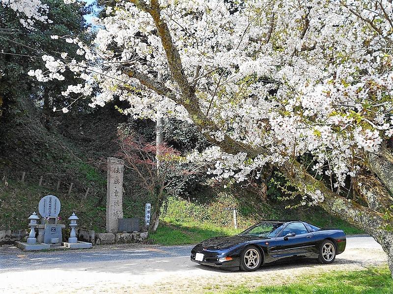法勝寺城&米子城の桜」こるまろ...
