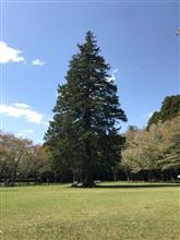 この〜木なんの木