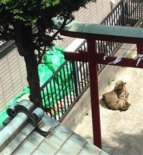 松猫 (本日午前)