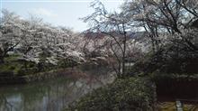 3月31日桜を見に・その2