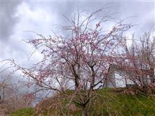 たかもりの湯(栗原市)