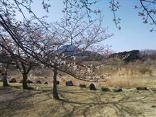 桜・・・咲きました!