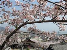 三井寺。桜と琵琶湖と、るろうに剣心。